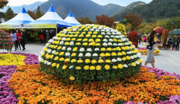 Chrysanthemums Festival in Yangsan City, South Korea